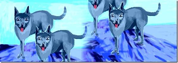 branco di lupi affamati